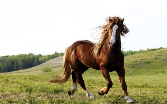 Información sobre el caballo 5