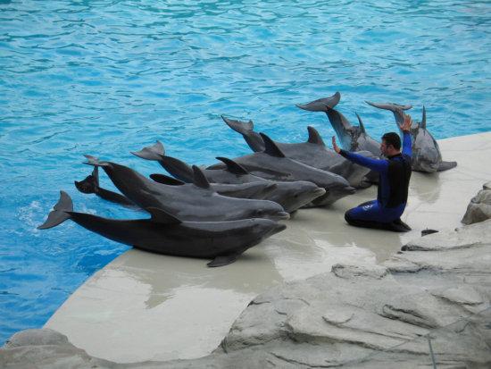 Información sobre el delfín 1