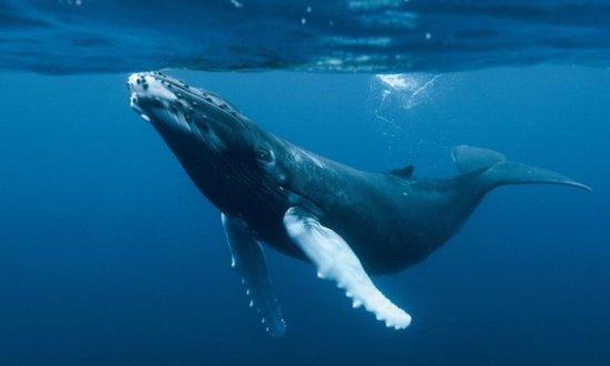 la ballena azul 1