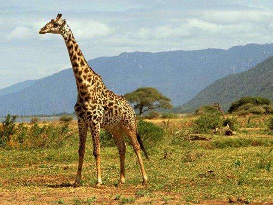 Animales de la selva 1