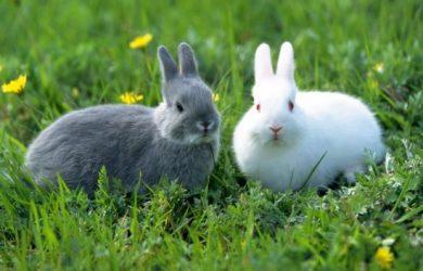 Fauna Informacion Sobre Animales