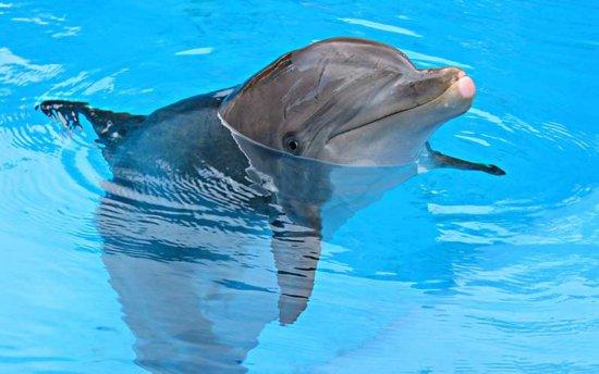 Delfín Nariz de Botella 1