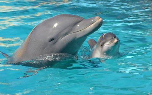 Delfín Nariz de Botella 2