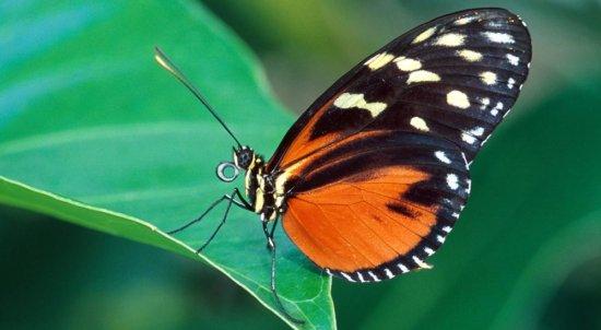 Información sobre las mariposas 2
