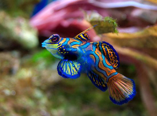 Los 10 peces más bellos 1
