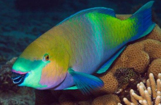 Los 10 peces más bellos 10