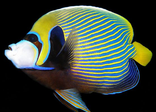 Los 10 peces más bellos 2
