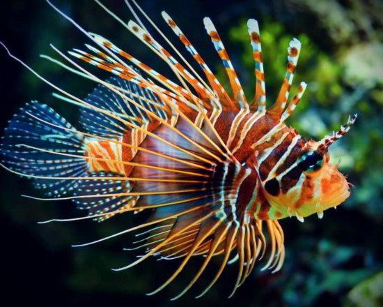 Los 10 peces más bellos 3