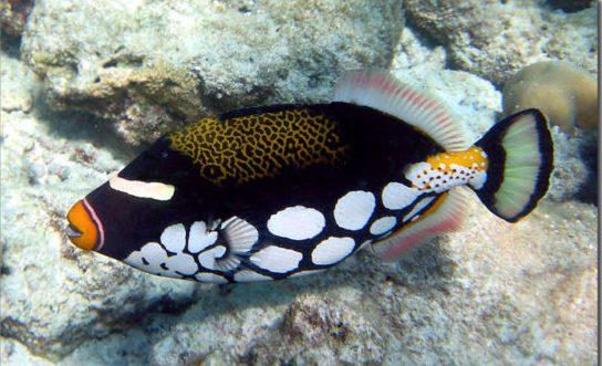 Los 10 peces más bellos 4