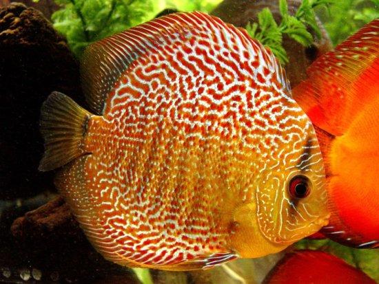 Los 10 peces más bellos 6