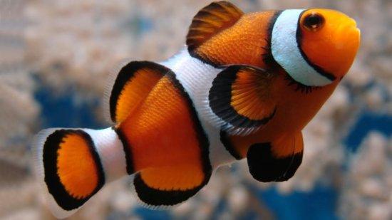 Los 10 peces más bellos 9