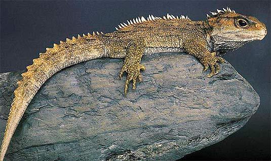 Los 5 reptiles más grandes del planeta 5
