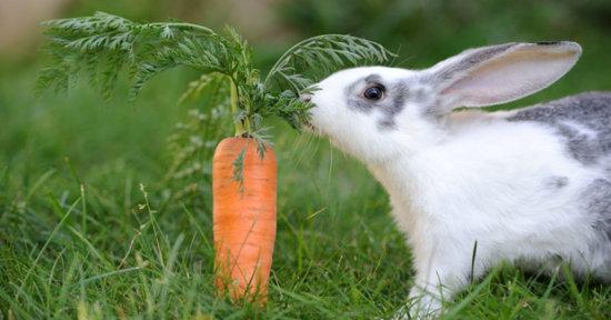 El conejo 2