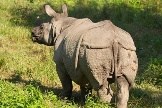 el-rinoceronte-de-java-3