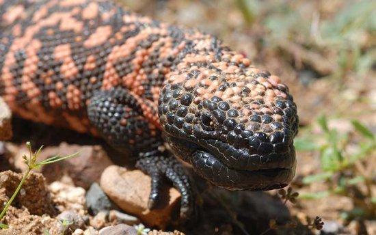 los-reptiles-mas-venenosos-del-mundo-1