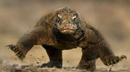 los-reptiles-mas-venenosos-del-mundo-3