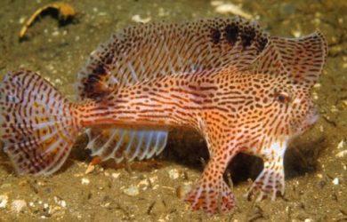 pez-rosado-con-manos
