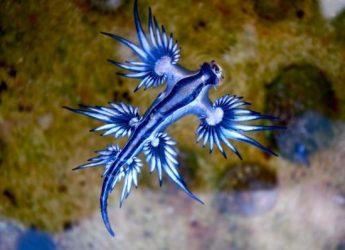 el-dragon-azul