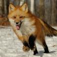 informacion-sobre-los-animales-salvajes-2