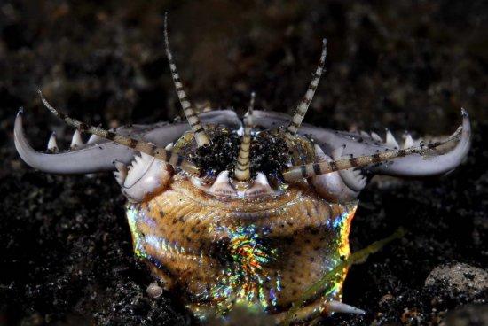 el-gusano-bobbit-1