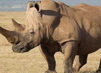 todo-sobre-el-rinoceronte-1