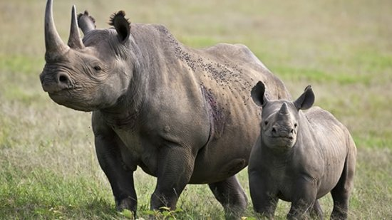todo-sobre-el-rinoceronte-2