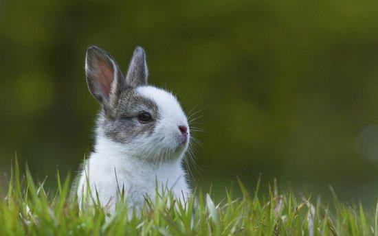 18 curiosidades sobre los conejos ENTRE EL CAOS Y EL